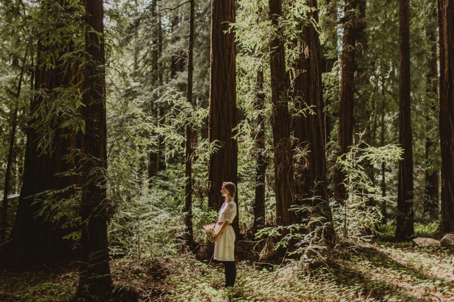 Summer Redwood Elopement